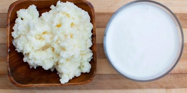 Как правильно употреблять тибетский молочный гриб