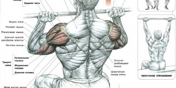 какие мышцы работают при армейском жиме