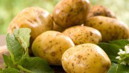 калорийность 100 гр картофеля