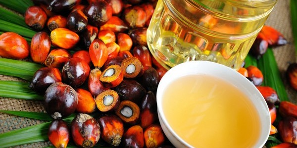 Пальмовое масло польза и вред детское питание