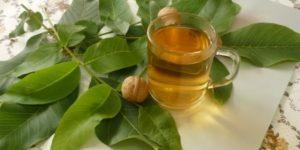 Полезные свойства и возможный вред от листьев дерева грецкого ореха