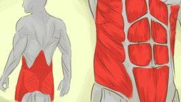 где находятся мышцы кора
