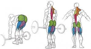 задействованные мышцы