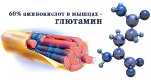 процент аминокислоты в мышцах