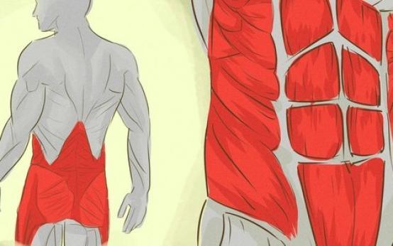 Мышцы кора: что это, где находятся, упражнения для укрепления в домашних условиях