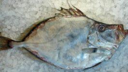 чем полезна рыба дори