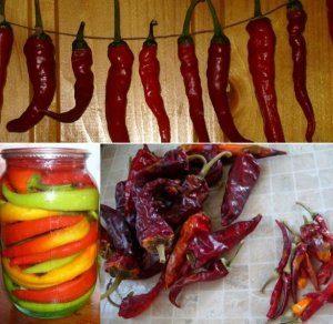 хранение овоща